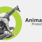 Animal protection laws in India